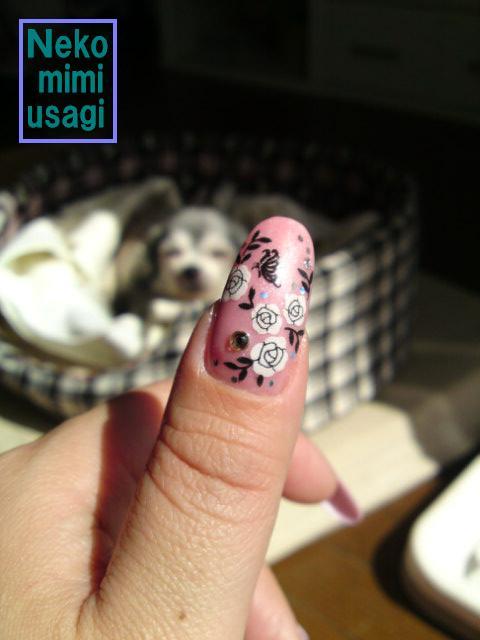 ピンクでバラと蝶・・・☆